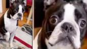 Clip chú chó bị chủ bắt ăn kiêng liền có phản ứng đốn tim cư dân mạng