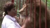 Sư tử ôm chầm lấy ân nhân cứu mạng sau 2 năm gặp lại