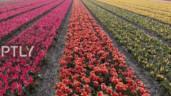 Chiêm ngưỡng cảnh sắc ngoạn mục trong vườn hoa rộng nhất thế giới