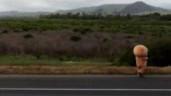 Người đàn ông mặc bộ đồ gấu bông đi bộ 400 dặm khiến cộng đồng mạng thích thú