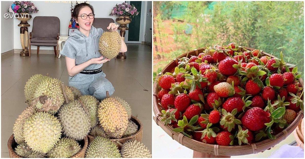 Nhà Celeb: Những lần thu hoạch quả trong vườn của Lý Nhã Kỳ, đầy ắp, một mình ăn không xuể