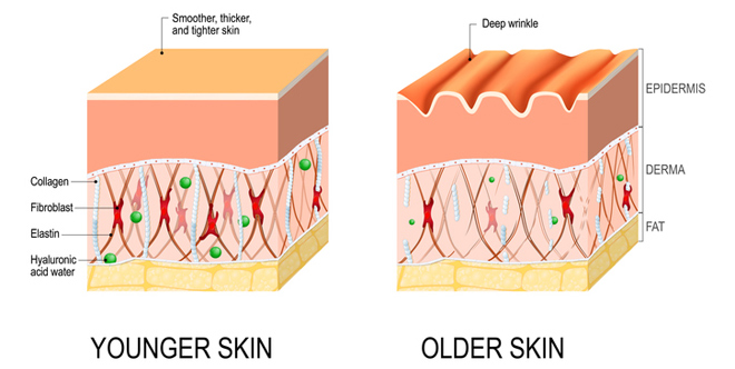Vì sao uống Dr. Beautin Super Collagen + C giúp trẻ hoá da? - 1