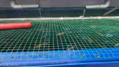 Thầy giáo Sài Gòn trồng rau, nuôi cá trên sân thượng 10m2, vốn 20 triệu giờ ăn không hết
