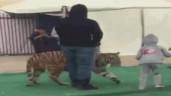 Kinh hoàng cảnh bé gái bị hổ dữ tấn công ngay giữa chợ