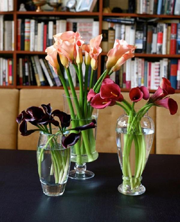 Hoa Rum - Đặc điểm, ý nghĩa, cách trồng và chăm sóc cây ra hoa đẹp - 5