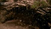 Núi lửa phun ra hàng triệu con dơi mỗi đêm