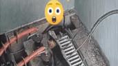 Mèo mướp hồi sinh thần kỳ sau khi bị điện giật