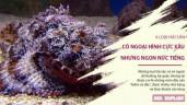 4 loại hải sản có ngoại hình cực xấu nhưng thơm ngon nức tiếng gần xa