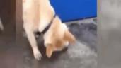 Chó nhà nhiệt tình tát nước cứu cá rô phi