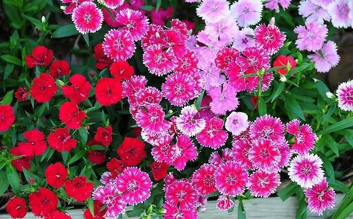 """12 loai hoa trong ban cong nay se khien nha ban """"noi nhat pho"""" - 3"""