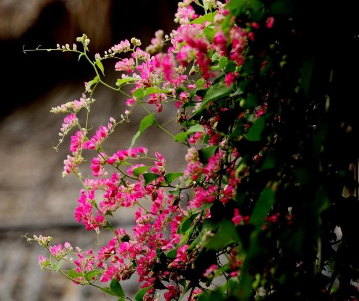 """12 loai hoa trong ban cong nay se khien nha ban """"noi nhat pho"""" - 14"""