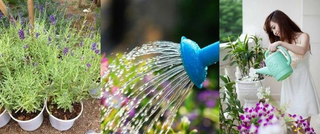 hoc cach trong hoa oai huong cho nha vua dep vua thom ngat - 10