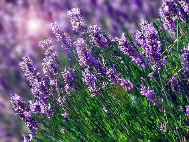 hoc cach trong hoa oai huong cho nha vua dep vua thom ngat - 1