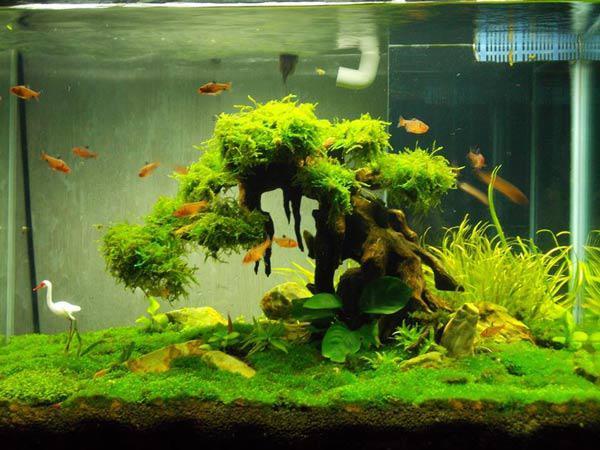 Nhà thêm sang, hết sạch khí độc nhờ những loại cây thủy sinh vừa đẹp vừa dễ chăm - 18