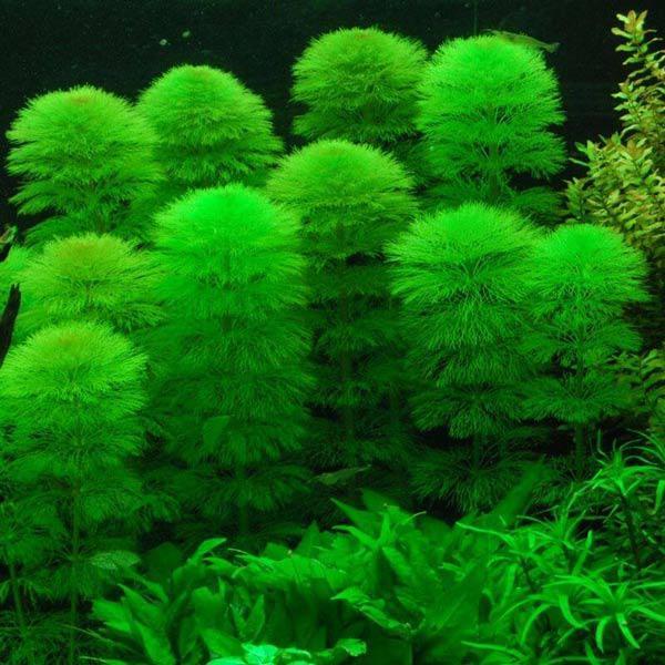 Nhà thêm sang, hết sạch khí độc nhờ những loại cây thủy sinh vừa đẹp vừa dễ chăm - 15