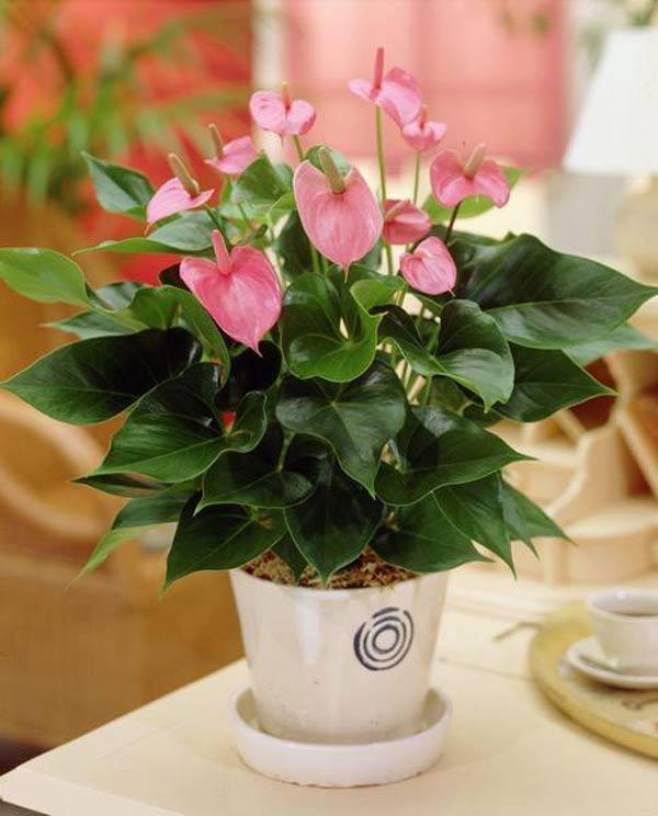 cach trong cay hong mon cho hoa ruc ro, mang may man thinh vuong cho gia chu - 8