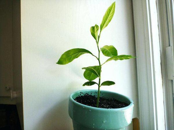 Loại quả ăn xong có thể bỏ hạt ra vườn, cuối năm hoa nở bung, đỡ tốn cả triệu - 5