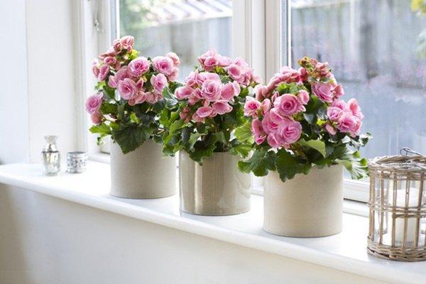 Trên ban công trồng những loại hoa này, nhà xinh như ở Đà Lạt, ai cũng mê - 4