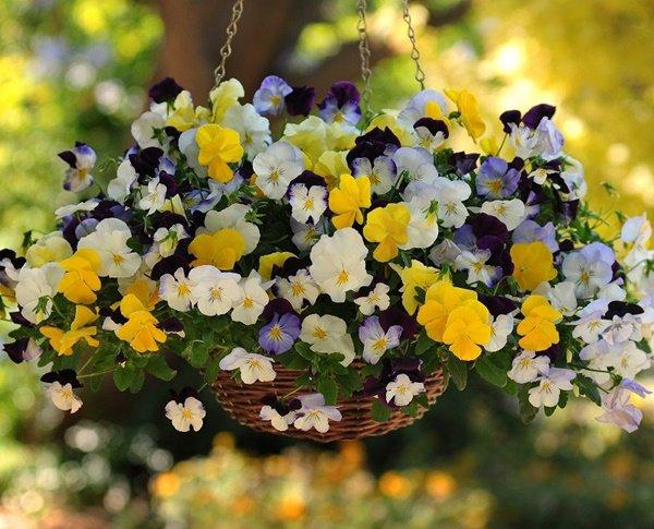 Trên ban công trồng những loại hoa này, nhà xinh như ở Đà Lạt, ai cũng mê - 6