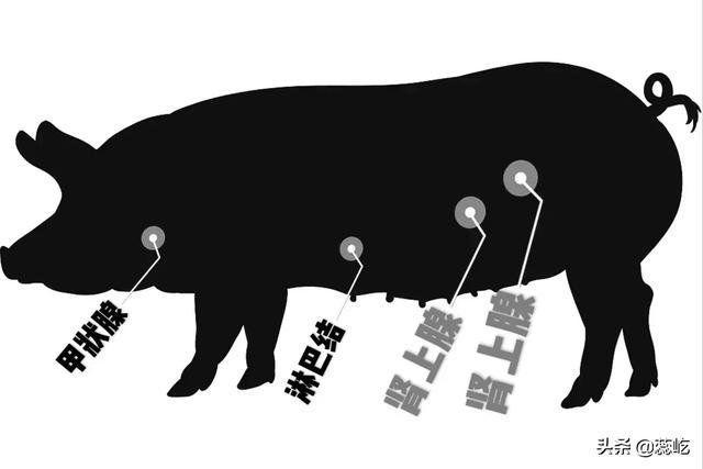 Chuyên gia tiết lộ 6 bộ phận trên động vật không nên ăn, có loại còn gây mất mạng - 1