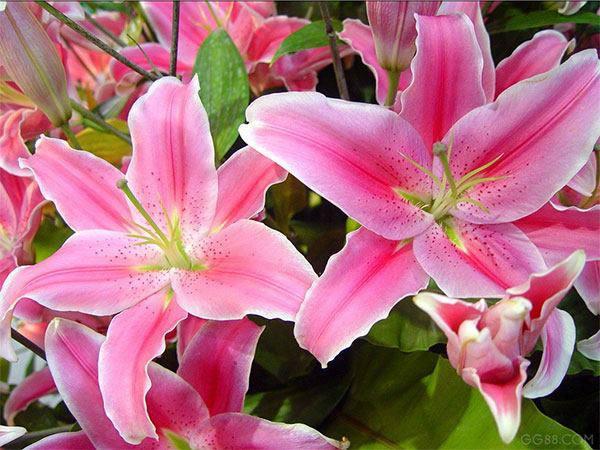 Những loại hoa đẹp không nên rước lên bàn thờ - 1