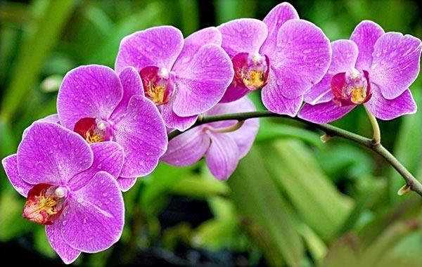 Những loại hoa đẹp không nên rước lên bàn thờ - 3