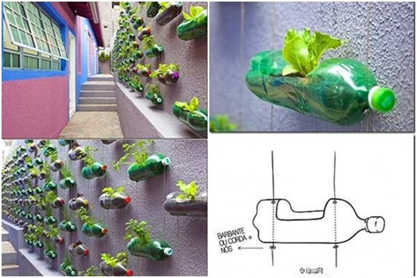Bí quyết trồng cây từ vỏ chai nhựa không tốn 1 xu, quanh năm vẫn có rau ăn đủ - 3