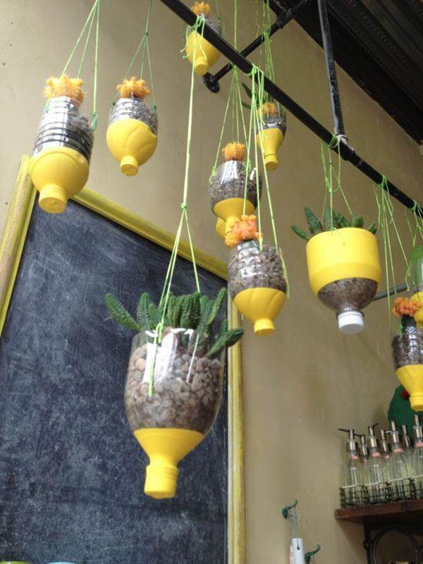 Bí quyết trồng cây từ vỏ chai nhựa không tốn 1 xu, quanh năm vẫn có rau ăn đủ - 11