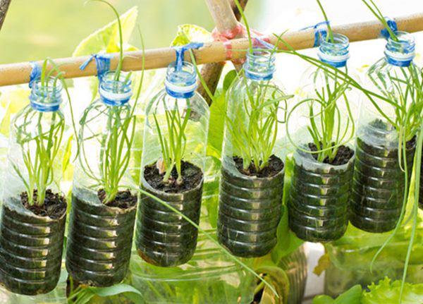Bí quyết trồng cây từ vỏ chai nhựa không tốn 1 xu, quanh năm vẫn có rau ăn đủ - 13