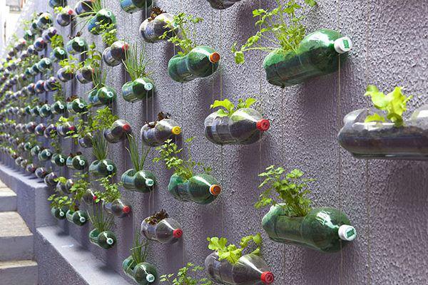 Bí quyết trồng cây từ vỏ chai nhựa không tốn 1 xu, quanh năm vẫn có rau ăn đủ - 4