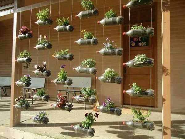 Bí quyết trồng cây từ vỏ chai nhựa không tốn 1 xu, quanh năm vẫn có rau ăn đủ - 5