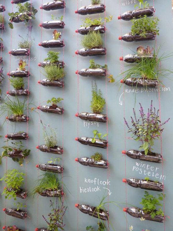 Bí quyết trồng cây từ vỏ chai nhựa không tốn 1 xu, quanh năm vẫn có rau ăn đủ - 6