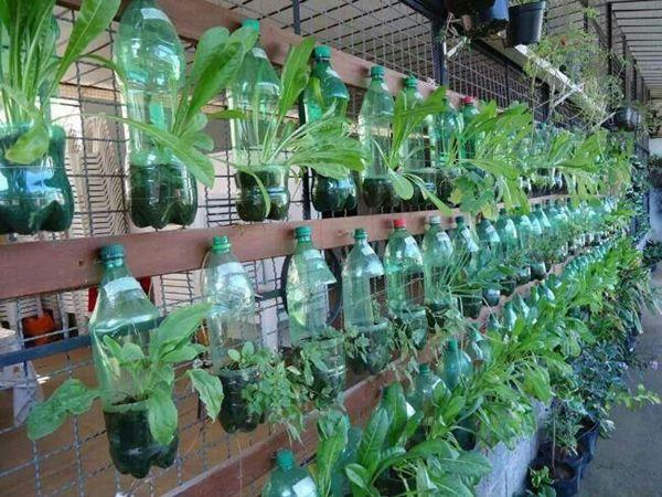 Bí quyết trồng cây từ vỏ chai nhựa không tốn 1 xu, quanh năm vẫn có rau ăn đủ - 8