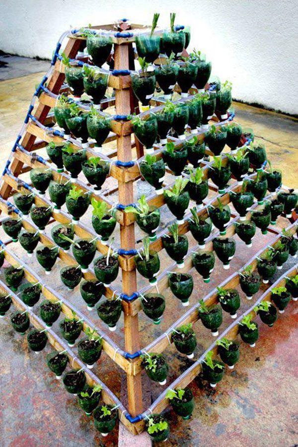 Bí quyết trồng cây từ vỏ chai nhựa không tốn 1 xu, quanh năm vẫn có rau ăn đủ - 10