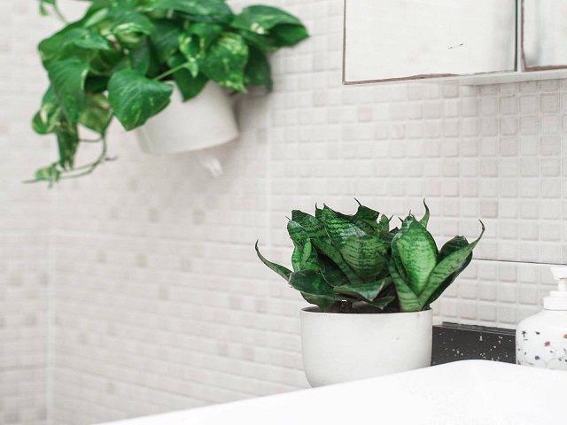 Tuổi Thân hợp cây gì để vừa đẹp lại vừa rước nhiều lộc vào nhà?
