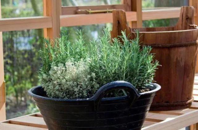 Để 4 loại cây này trong nhà, vừa hợp phong thủy vừa đuổi muỗi cực tốt - 4