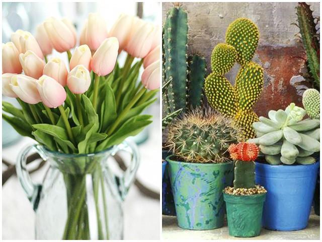 Những loại hoa đẹp mấy cũng không nên rước vào nhà, loại thứ 3 nhiều người chơi nhất