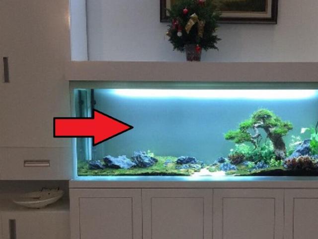 5 điều lưu ý khi nuôi cá cảnh trong nhà kẻo phạm phong thủy, mất lộc làm ăn