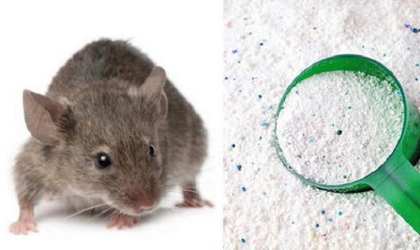 8 cách đuổi chuột hiệu quả hơn dùng thuốc, bạn có thể áp dụng trong nhà - 1