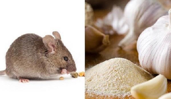 8 cách đuổi chuột hiệu quả hơn dùng thuốc, bạn có thể áp dụng trong nhà - 3