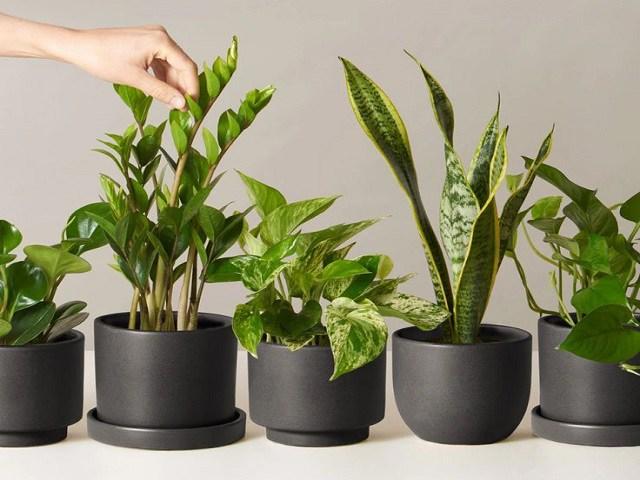 5 loại cây cảnh để bàn dễ chăm sóc, nhà nào chưa có phải sắm ngay