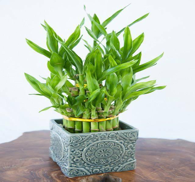 5 loại cây dễ chăm dễ trồng lại tốt cho phong thủy, rước về nhà tụ lộc gấp đôi - 1