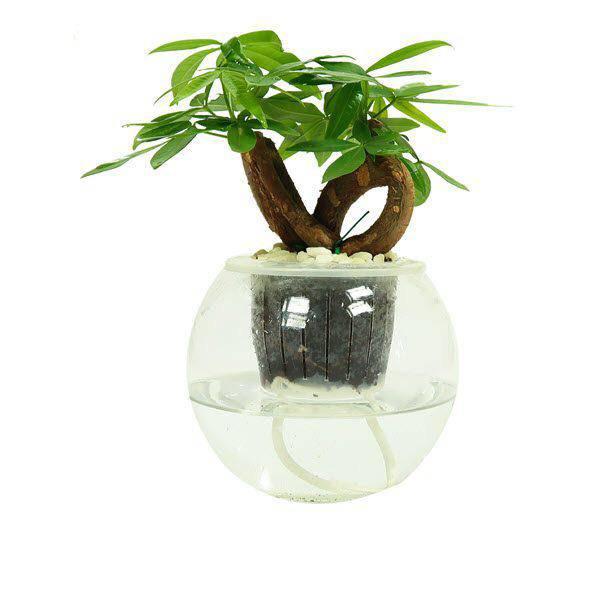 5 loại cây dễ chăm dễ trồng lại tốt cho phong thủy, rước về nhà tụ lộc gấp đôi - 5