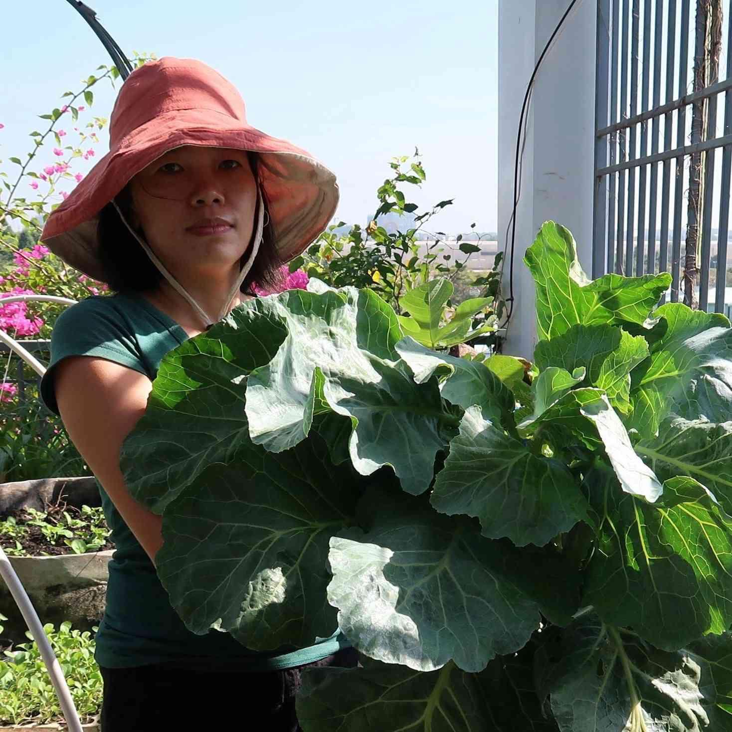 Chán việc văn phòng về trồng vườn rau trên sân thượng, vạn người mê - 1