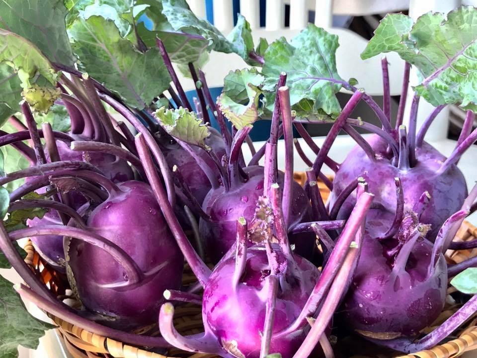 Mẹ đảm Sài Gòn trồng rau sân thượng tốt um như... rau quả amp;#34;đột biếnamp;#34; - 6