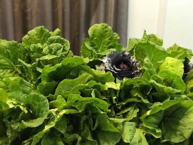 Mẹ đảm Sài Gòn trồng rau sân thượng tốt um như... rau quả amp;#34;đột biếnamp;#34; - 7