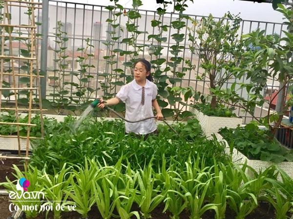 Bố Hà Nội vác 5 tấn đất lên sân thượng trồng rau, phun amp;#34;nước thầnamp;#34; cây tốt ngồn ngộn - 21