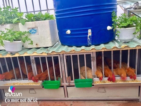 Bố Hà Nội vác 5 tấn đất lên sân thượng trồng rau, phun amp;#34;nước thầnamp;#34; cây tốt ngồn ngộn - 17