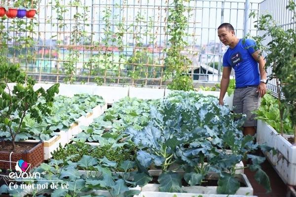 Bố Hà Nội vác 5 tấn đất lên sân thượng trồng rau, phun amp;#34;nước thầnamp;#34; cây tốt ngồn ngộn - 3