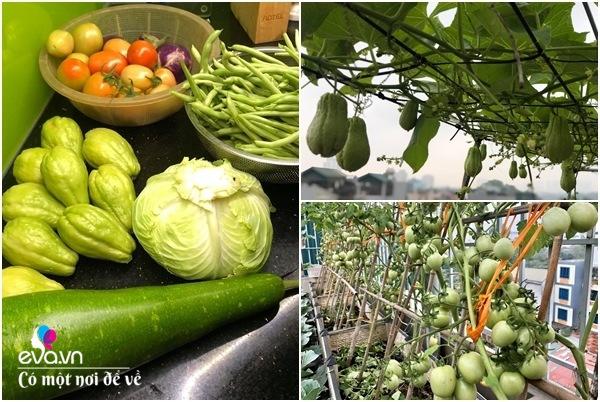 Bố Hà Nội vác 5 tấn đất lên sân thượng trồng rau, phun amp;#34;nước thầnamp;#34; cây tốt ngồn ngộn - 12